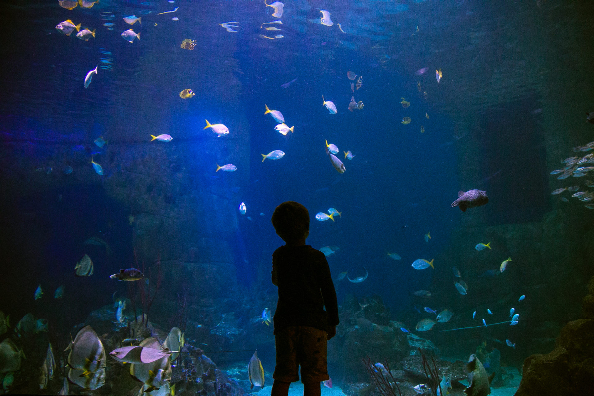 Young boy at the national marine aquarium