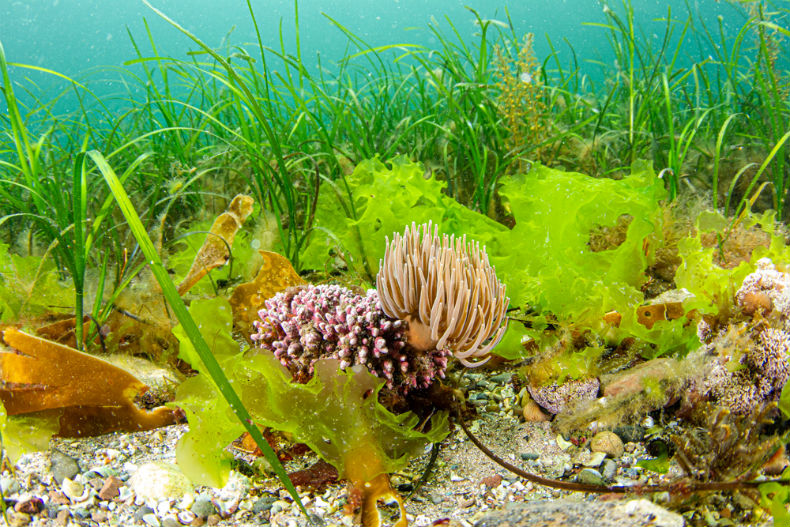 seagrass-cultivation