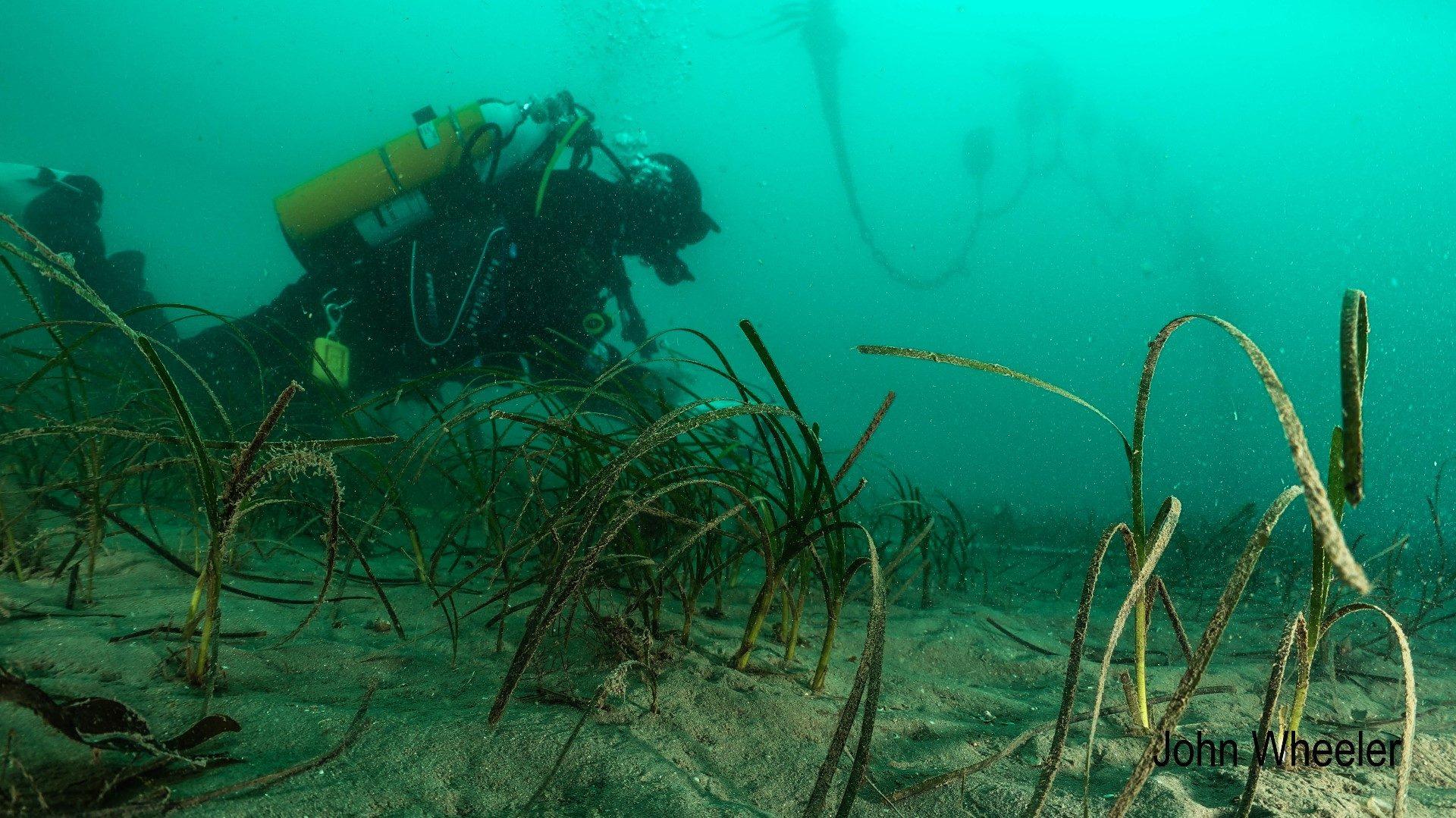 seagrass-blog