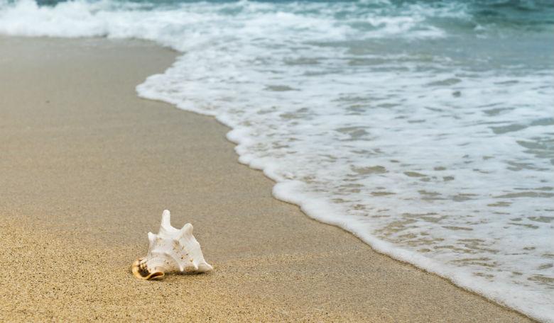 Shell-on-beach-ocean