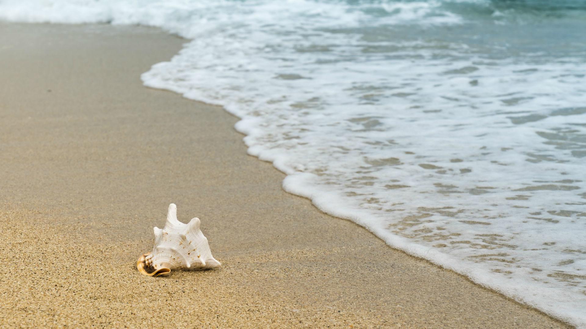 shell-beach-Ocean